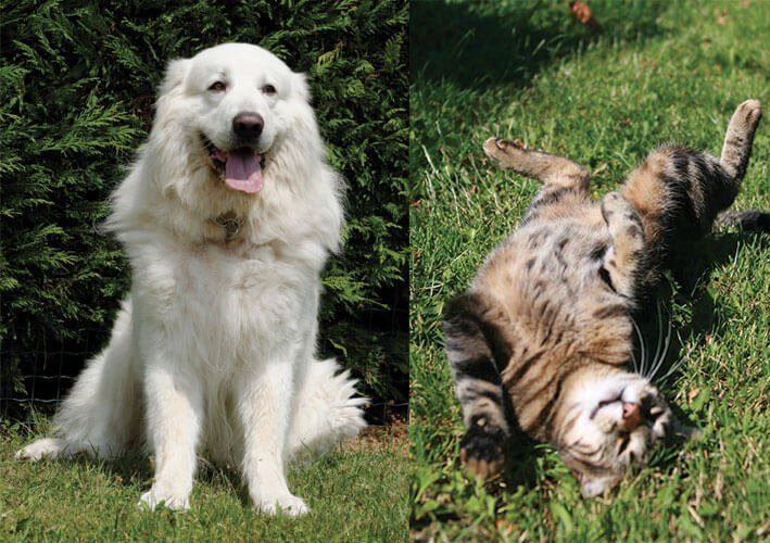chien et chat - Accueil