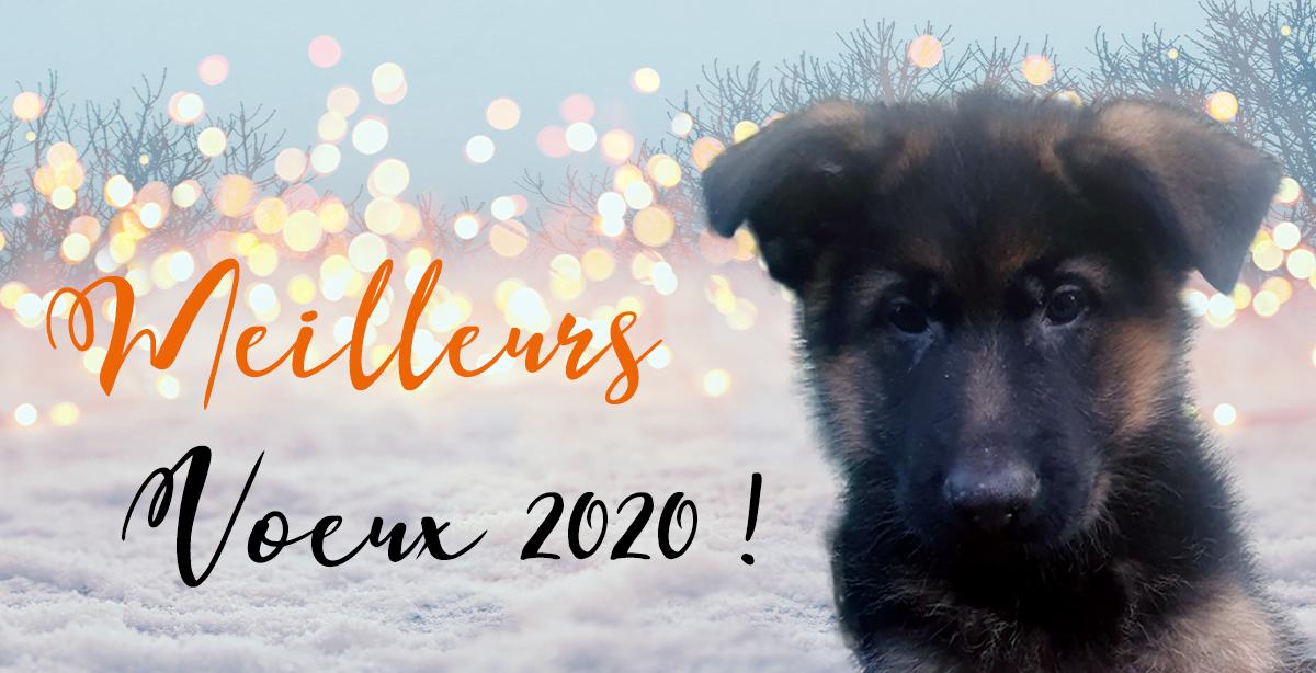 nouvel an post 2020 - Bonne année 2020 à toutes et à tous !
